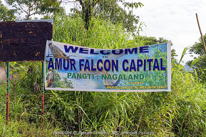'Welcome to Amur falcon Capital' sign at Doyang Hydroelectric Dam, near to migration hotspot, Nagaland, India. October.