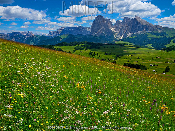 RF - Seiser Alm Dolomites plateau, alpine meadow, South Tyrol, Italy. (This image may be licensed either as rights managed or royalty free.)