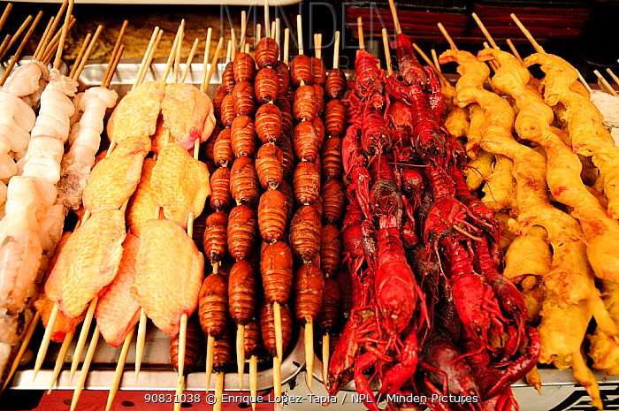 Butterfly pupae on skewers, next to chicken and crab skewers. Open-air food market in central Beijing, China.