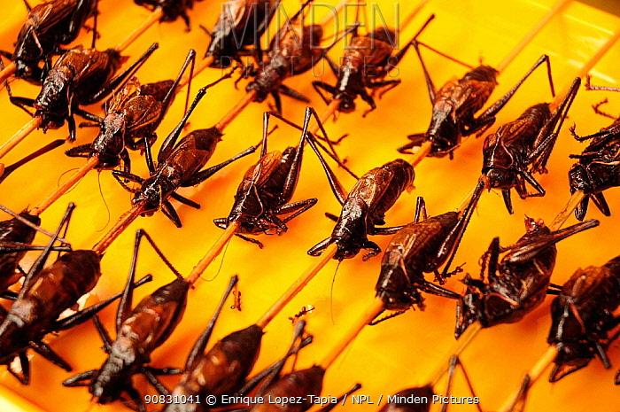 Crickets on skewers. Open-air food market in central Beijing, China.