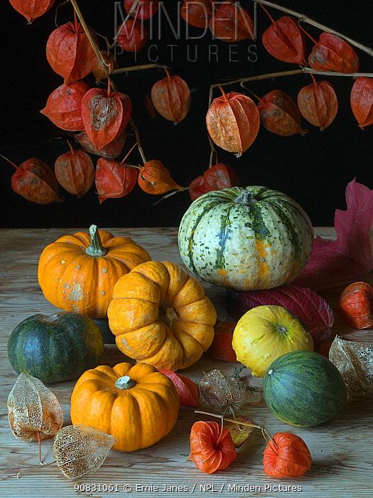Home-grown pumpkins and Chinese lantern (Physalis alkekengi).