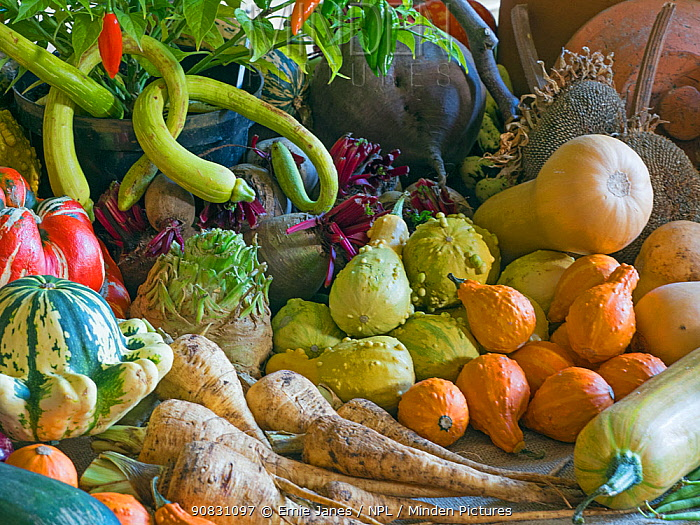 Home-grown fruit and vegetables harvested in the autumn. October.