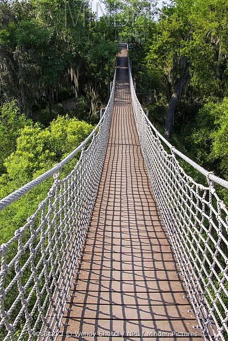 Rope bridge through tree tops. Santa Ana National Wildlife Refuge, near Alamo, Hidalgo County, Texas, USA. July 2019.