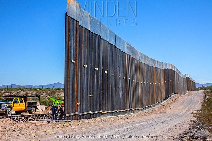 Border wall constuction through the Sonoran Desert. View from Sonoyta, Mexico towards Organ Pipe Cactus National Monument, Arizona, USA. November 2019.