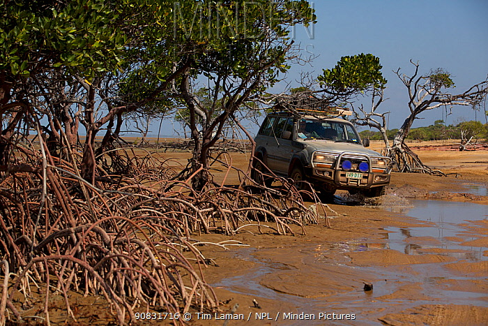 4x4 driving through the mangroves at the mouth of Running Creek. Queensland, Australia.