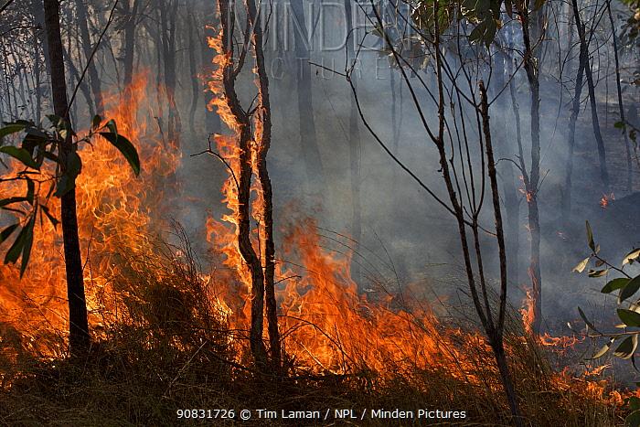 Bush fire on the Peninsula Development Road south of Archer River Roadhouse. Cape York Peninsula, Queensland, Australia. September 2012