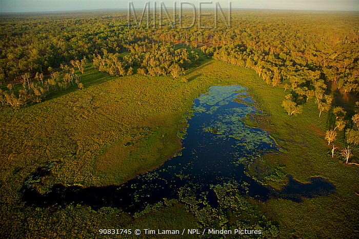 Aerial view of Green Swamp at sunrise, Piccaninny Plains Sanctuary, Cape York Peninsula, Queensland, Australia. September 2012