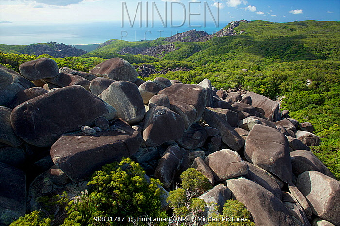 Rainforest refugia among boulder fields, Cape Melville Range, Cape Melville National Park, Cape York Peninsula, Queensland, Australia. . March 2013