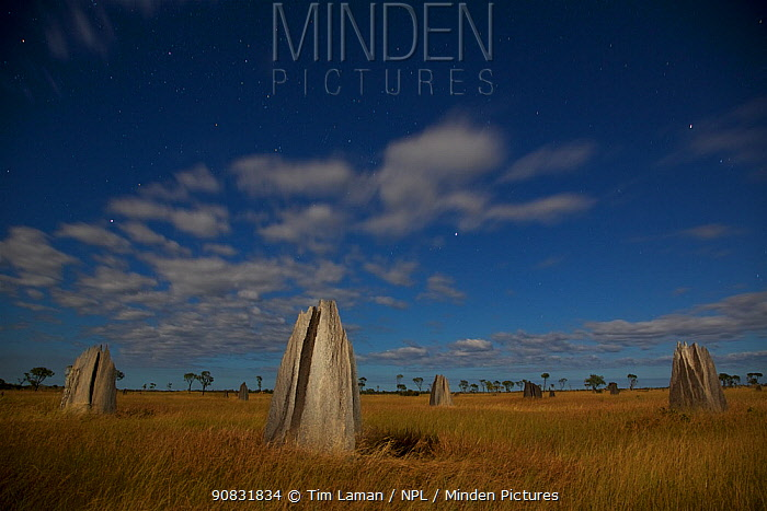 Termite mounds of the Nifold Plain with stars under a full moon. Cape York Peninsula, Queensland, Australia. June 2012