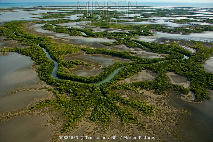 Wetlands and rivers of northern Lakefield National Park on the edge of Princess Charlotte Bay, Cape York Peninsula, Australia. June 2012