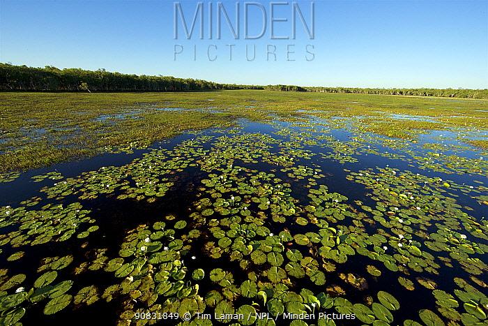 Green Swamp, Piccaninny Plains Sanctuary, Queensland, Australia. September 2013