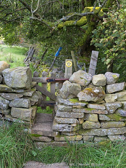 Gate through drystone wall, on public footpath. Wensleydale, Yorkshire Dales National Park, England, UK. September.