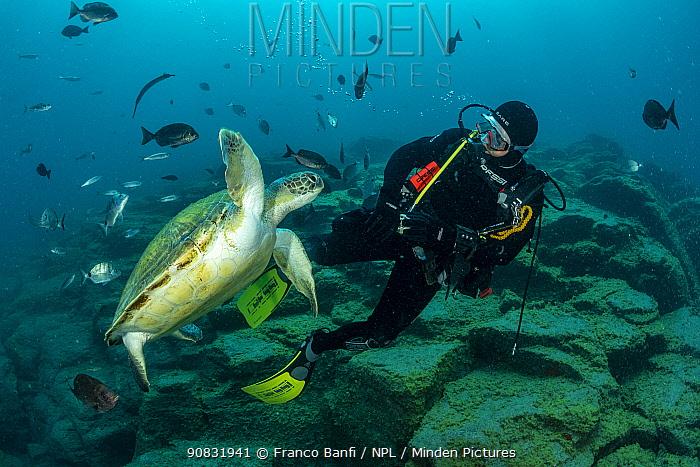 Scuba diver with Green turtle (Chelonia mydas), South Tenerife, Canary Islands, Atlantic Ocean.