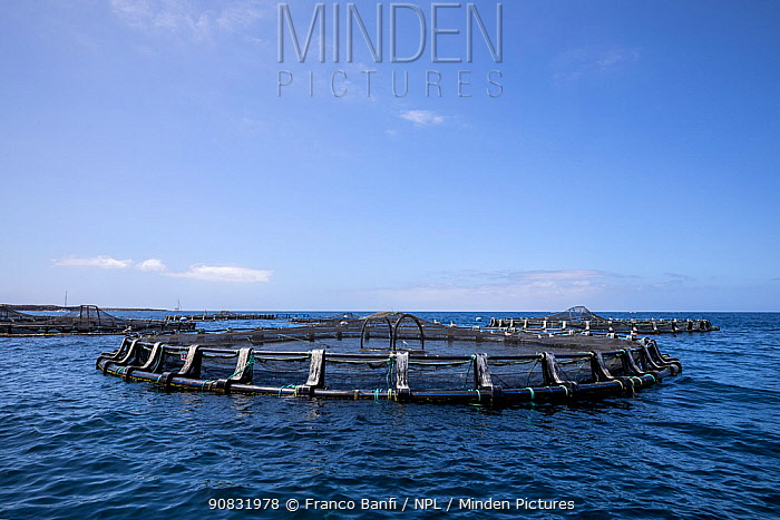 Floating fish cage out from Los Cristianos, Arona, South Tenerife, Canary Islands, Atlantic Ocean.