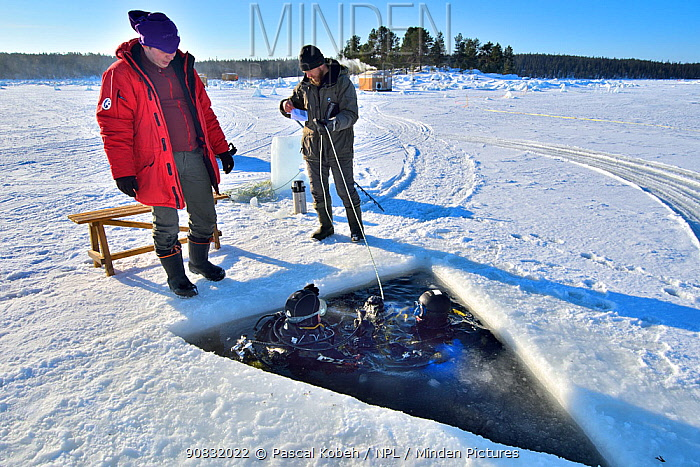 Divers getting in the water through the hole Karelia, Russia. White Sea.