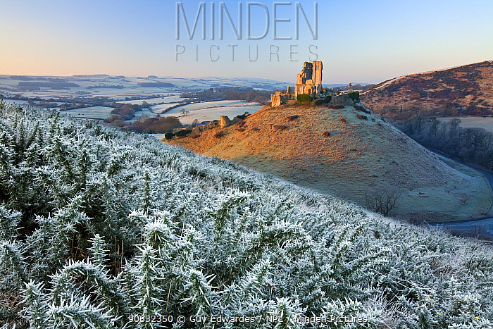 Corfe Castle from East Hill at dawn in winter, Ise of Purbeck, Dorset, England, January 2009