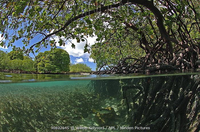 Split level view of Mangrove landscape, Passe Grande Magnan / Magnan channel, Aldabra, Indian Ocean