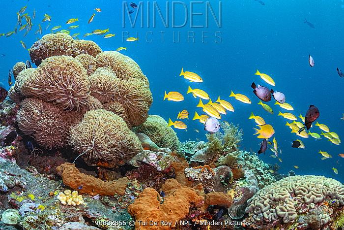 Bali tropical reef community. Tropical reef community comprising numerous colourful invertabrates and fish.Tulamben, North coast, Bali, Indonesia. Lesser Sunda Islands.