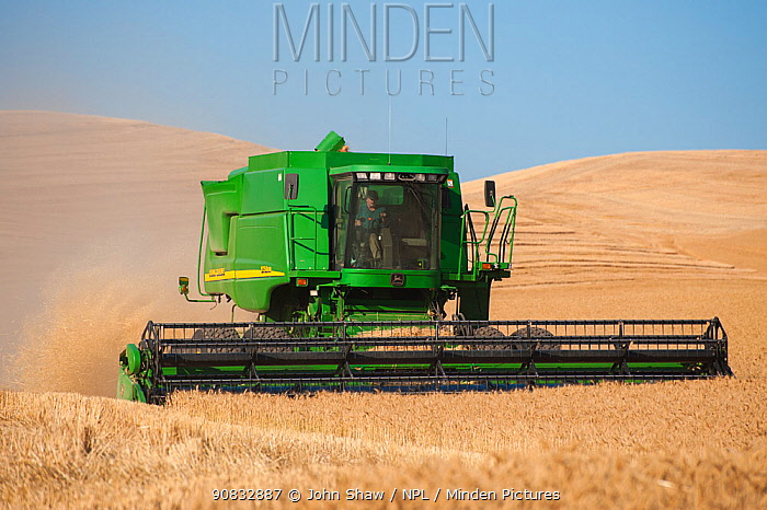 Combine harvesting wheat, Washington, USA, August