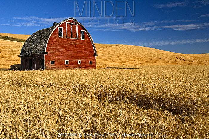 Barn and wheat field in the Palouse farming area of southeastern Washington, USA, August