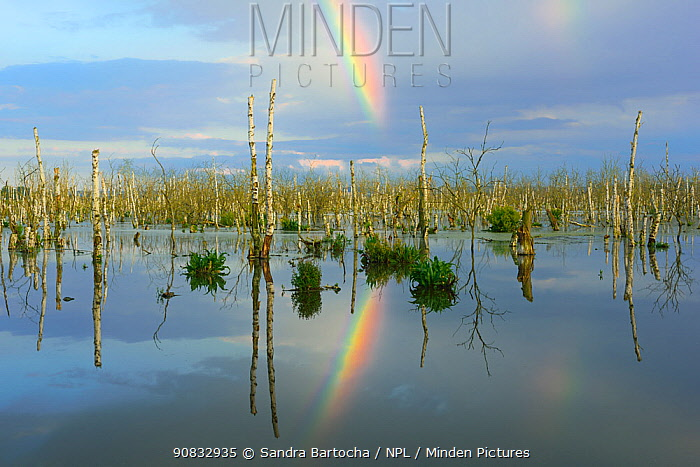 Rainbow reflected in Galenbecker See / Lake Galenbeck, renaturated area, Germany