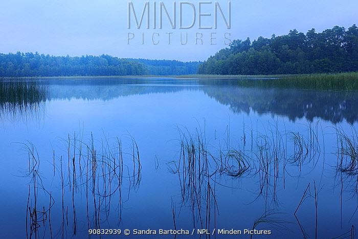 Lake Lagenhagen at dawn twilight, Nossentiner/Schwinzer Heide Nature Park , Germany, August.