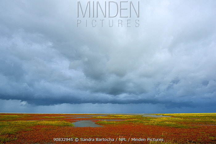 Saltmarsh and tidal channel at low tide, St. Peter Ording, National park Wadden sea, Germany