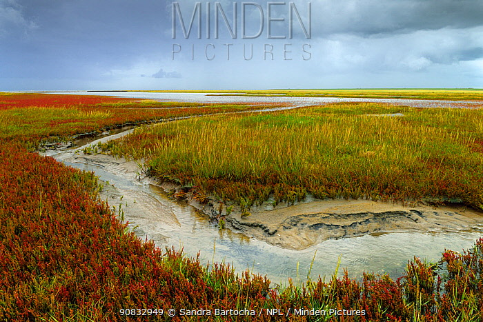 Saltmarsh and tidal channel, St. Peter Ording, Schleswig-Holstein Wadden Sea National Park, Germany, September.