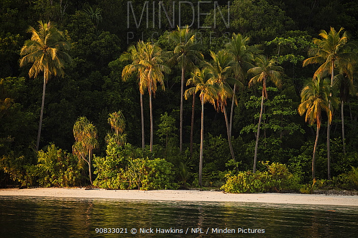 View of coastal beach with palm trees in Raja Ampat, West Papua, Indonesia. Pacific Ocean.