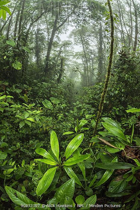 View of cloud forest in Choco region, Northwestern Ecuador.