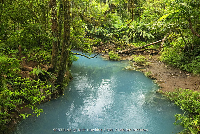 View of the Rio Celeste, tropical rainforest of Tenorio Volcano National Park, Costa Rica. The blue color arises due to a physical phenomenon known as Mie scattering triggered by the presence of certain minerals in the river's water.