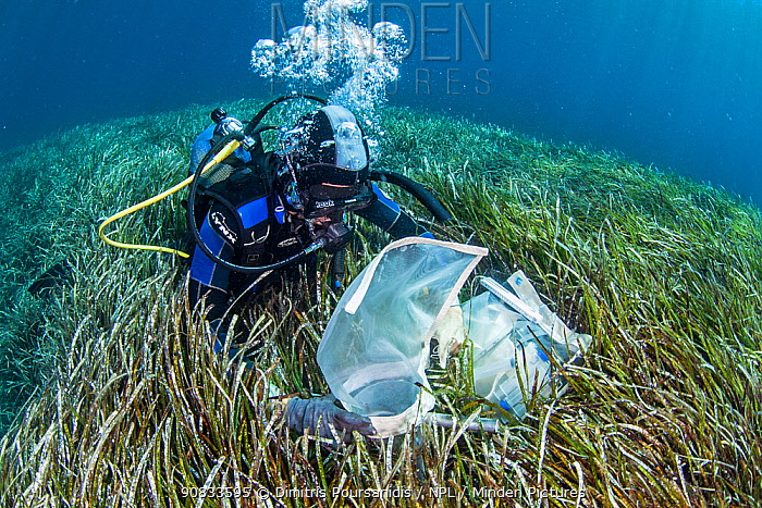 A researcher collecting data from the seagrass meadows (Posidonia oceanica), Sigri, Lesvos, North Aegean. The continous monitoring of the ecological status of the seagrass meadows is an inherent part of the conservation activities within a Protected Area.