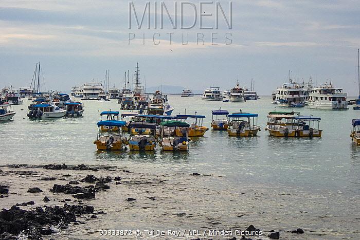 Dozens of tour boats lay idle in port,during Covid-19 lockdown, Puerto Ayora, Santa Cruz Island, Galapagos Islands April 2020
