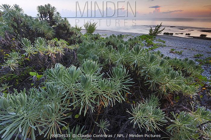 Coastal vegetation, Guanahacabibes Peninsula National Park, Pinar del Rio Province, western Cuba.