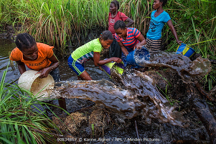 Women of Mpelu village practicinge agroforestry. Here they build makeshift dams out of mud, then sequester the fish, bucket out the water through nets and catch the fish. Democratic Republic of the Congo. May 2017.
