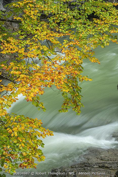 River Ara, Valle de Bujaruelo, Ordesa National Park, Spain. October 2019.