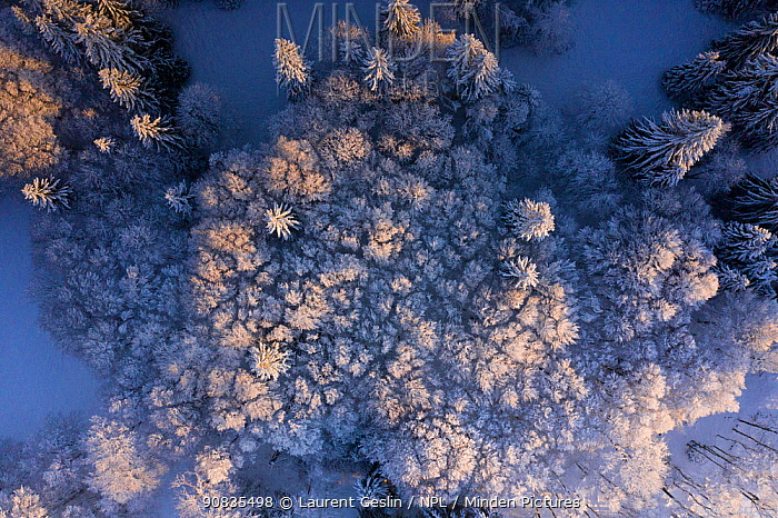 Aerial view of snow covered woodland in winter, Switzerland