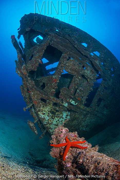 Meridian wreck, ship intentionally sunk in 2005. with Red starfish (Echinaster sepositus) Tenerife, Canary Islands.