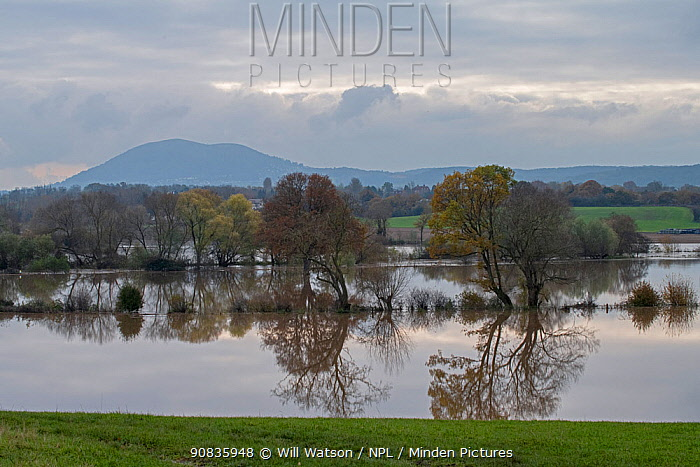 Flooded river, Teme Valley and the Malvern Hills AONB, Worcestershire, England, November 2019