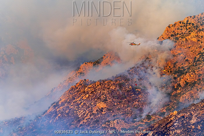 Lightning caused fire on Mount Lemmon, Forest Service Fire suppression Wildland Firefighters use helicopters to 'bomb' the hot spots to control the spread. Mount Lemmon's north palisades, Coronado National Forest, Arizona, USA. 6th June 2020.