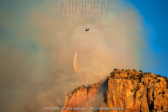 Lightning started fire on steep craggy terrain, with US Forest Service Fire suppression Wildland Firefighters using helicopters to 'bomb' the hot spots to control the spread. Pusch Ridge, Santa Catalina Mountains, Coronado National Forest, Arizona, USA. 6th June 2020.