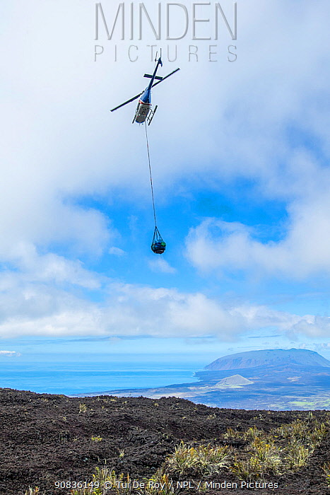 Floreana hybrid giant toretoises are helicoptered in from Wolf Volcano to the Fausto Llerena breeding facility on Santa Cruz Island, Galapagos.