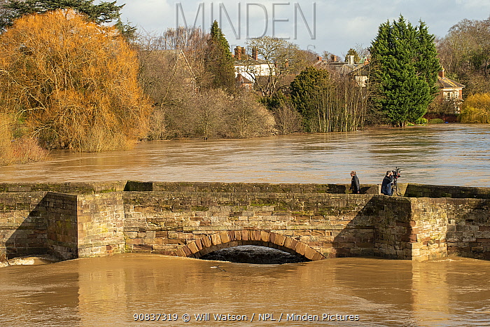 Old Wye Bridge during peak floods, with news camera man, Hereford, Storm Dennis, UK. Taken during Storm Dennis, 17 February 2020.