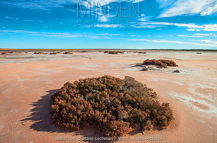 Little Sandy Desert, Kimberley, Western Australia. March 2012