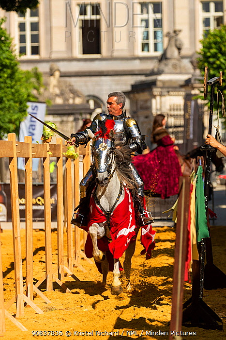Man dressed as medieval knight riding Arab mare, utting lettuce with sword. Ommegang religious and historical pageant procession, Brussels, Belgium. June 2019.