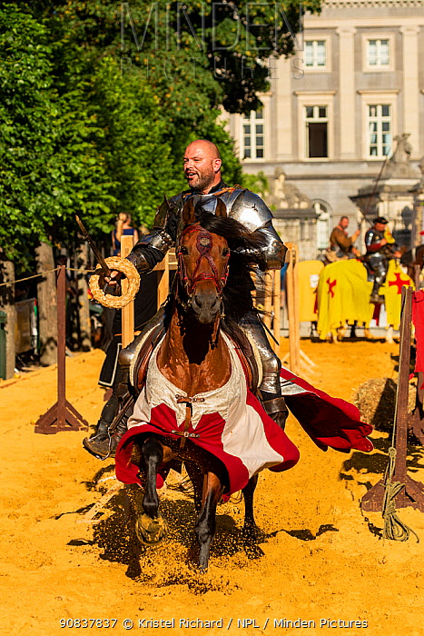 Man dressed as medieval knight riding horse, collecting rings with sword. Ommegang religious and historical pageant procession, Brussels, Belgium. June 2019.