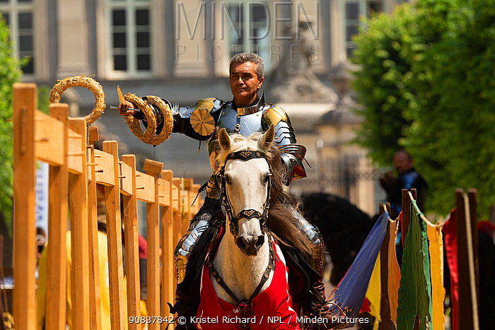 Man dressed as medieval knight riding Arab mare, collecting rings with sword. Ommegang religious and historical pageant procession, Brussels, Belgium. June 2019.