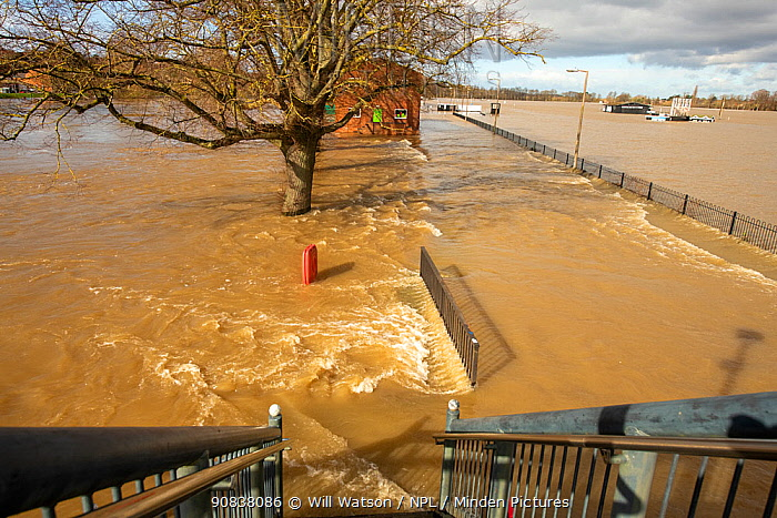 Fast-flowing floodwater from Worcester Racecourse as viewed from Sabrina Bridge, River Severn, England, UK. February 2020.