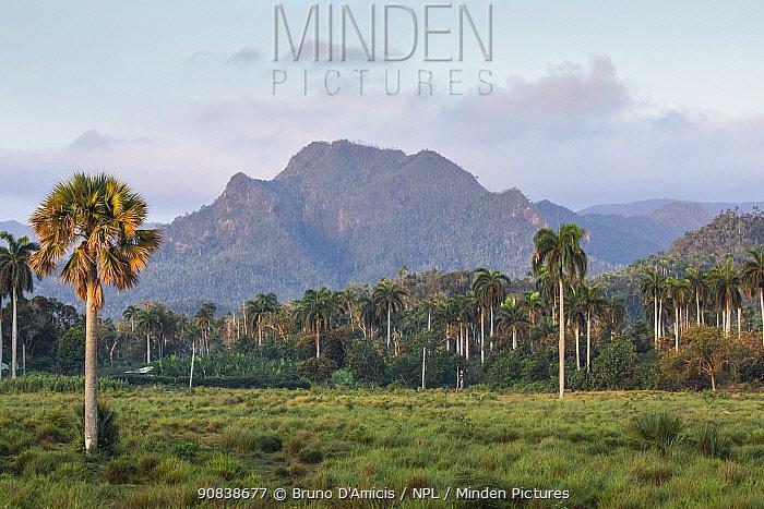 Mountain and palm vegetation near Baracoa, Cuba.