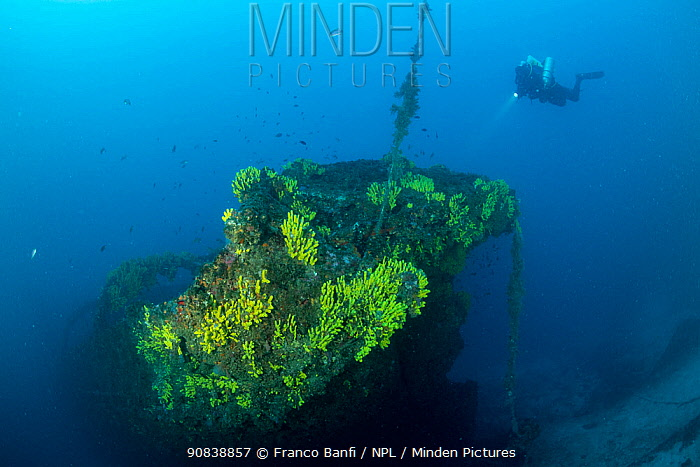 Rebreather diver exploring the wreck of the Italian tugboat Ursus which sank on 31 January 1941, covered with yellow sponges (Aplysina cavernicola), near Stoncica lighthouse, Vis Island, Croatia, Adriatic Sea. July 2019.